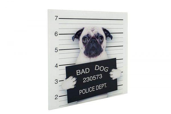 Obraz Bad Dog 40x40cm Mops sklo