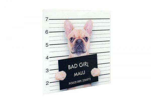 Obraz Bad Girl 40x40cm Franz. Bulldogge sklo