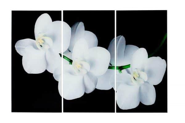 Obraz Orchidee 3-dielny sklo 60 x 30 cm