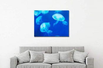 Obraz Meduse 60x80cm Quallen sklo