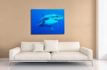 Obraz Shark 60x80cm Weißer Hai sklo
