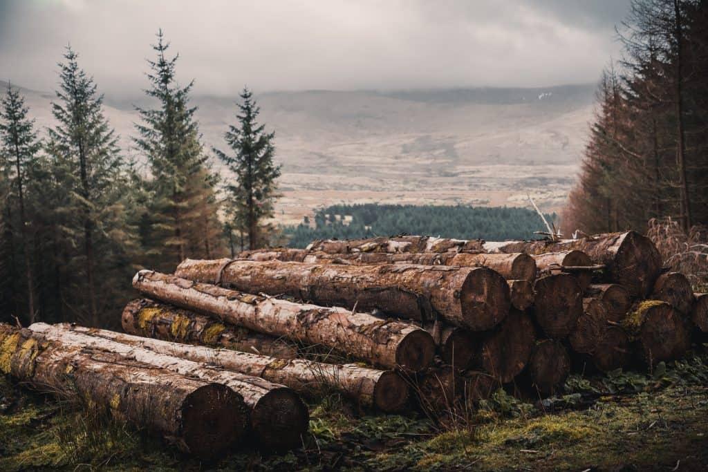 drevene pne, z ktorych sa vyraba nábytok