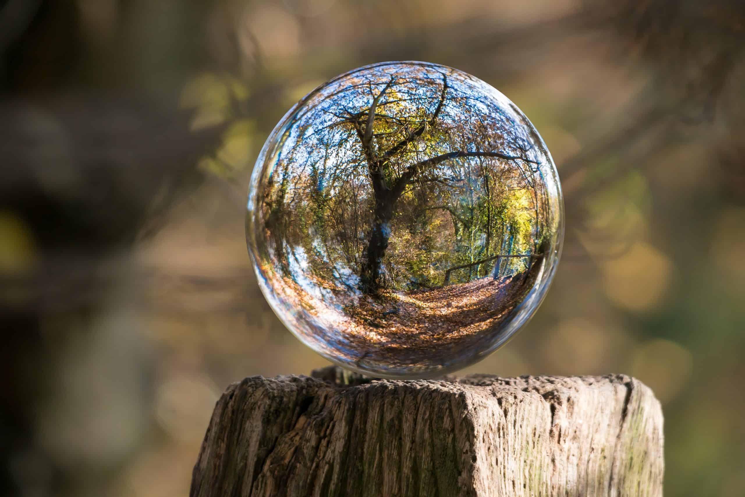 bublina na dreve