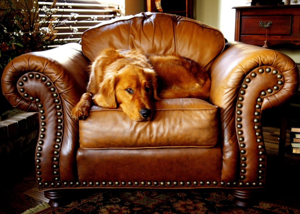 pes na sedačke