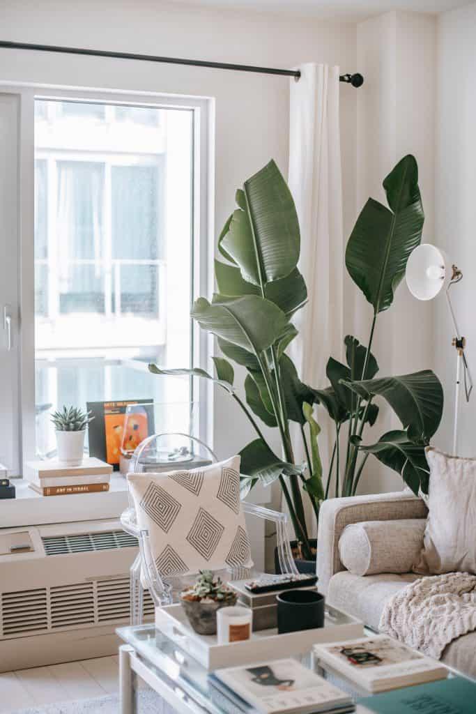 Jarné dekorácie - rastliny v interiéri. Zdroj: pexels.com